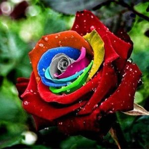 Egrow 200Pcs Rainbow Rose Seeds Rare Colorful Flower Potted Plant Garden Bonsai